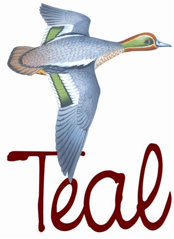 teal logo (2)
